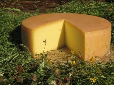 Tiroler BergTilsiter-Käse BIO, BioAustria, ca 300 g, Österreich