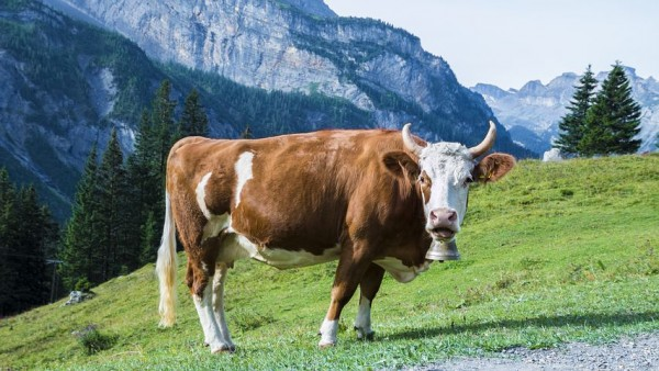 Rinder-Salami, BIO, ca. 200g, 100% Rind, Vorarlberg